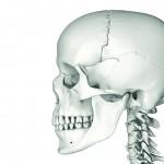 Gelling scaffolds developed to regenerate craniofacial bone