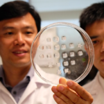 New patch aims to turn energy-storing fats into energy-burning fats